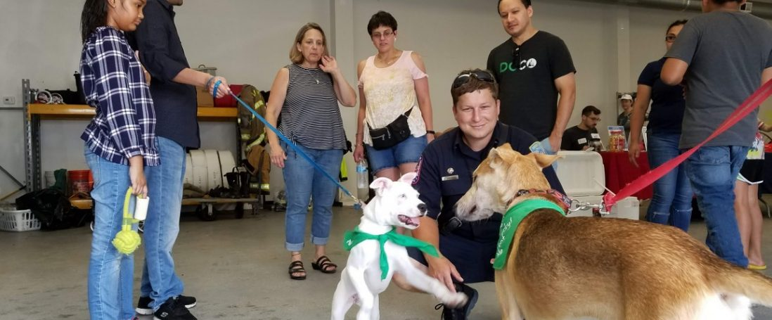 Dog Adoption Day at KVFD!